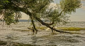 Water, Tree, Bank, Shore stock photography
