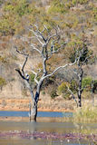 Water and Tree Landscape Royalty Free Stock Photo