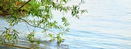 Water and tree Stock Photography