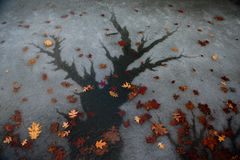 Water tree Royalty Free Stock Photo