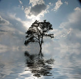 Water Tree Stock Images