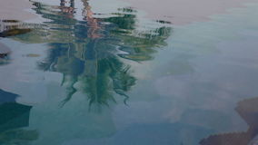Water tree reflection stock footage