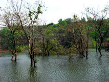 Water Trees. Trees grow in a lake in India Stock Photography