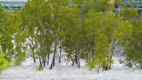 Water trees dam currents Royalty Free Stock Photos