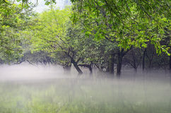 Water, trees and morning fog Royalty Free Stock Photos