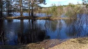 Water. Trees reflecting in the water on a sunny spring morning stock video footage
