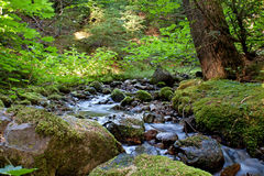 Water Tumbling Over Peaceful Forest Creek. Water tumbles across rocks in a peaceful forest creek Royalty Free Stock Photography