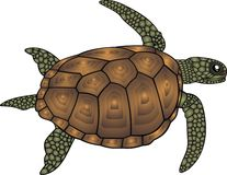 Water turtle isolated Royalty Free Stock Photos