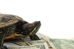 Water turtle and money Stock Photo