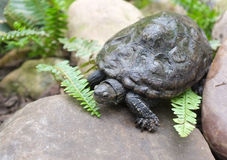 Water turtle on a stone. Tropical water turtle on a rock with ferns Stock Photography
