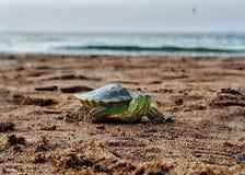 Water turtle. Sea Royalty Free Stock Photos