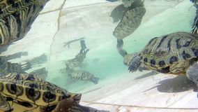 Water turtles stream. Natural waves stock video footage