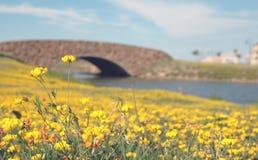 Water under the bridge. And flower fieldn stock photos