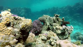 Water, Underwater, The corals and fish. stock video footage