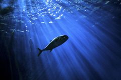Water, Underwater, Marine Biology, Fish Royalty Free Stock Photography