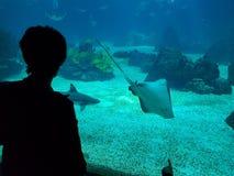 Water, Underwater, Marine Biology, Sea stock photo