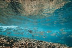 Water, Underwater, Sea, Reef royalty free stock image