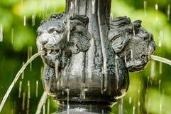 Water van leeuwenmond stock foto