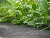 water van regendaling op groene bladeren en concrete muur royalty-vrije stock fotografie