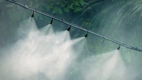 Water Vapor Pumping Out Irrigating Jungle Plants stock footage