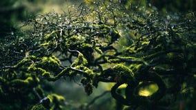 Water, Vegetation, Branch, Leaf Stock Images