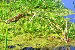 Water vegetation Stock Photo