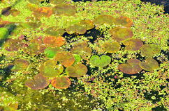 Water vegetation Royalty Free Stock Images