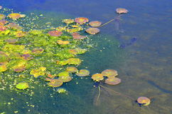 Water vegetation Stock Images