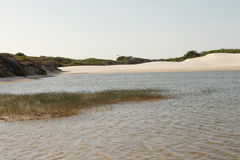 Water, vegetation and sand Royalty Free Stock Photo