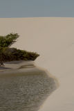 Water, vegetation and sand Royalty Free Stock Photos