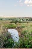 Water in veld Stock Photos