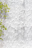 Water wall at a waterfall with branches Royalty Free Stock Images