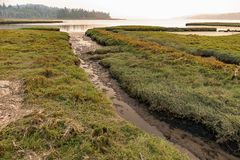 Water way along grassland, in wetland, on the sound stock photo