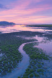 Water way on cracked clay white little green grass during sunset Royalty Free Stock Images