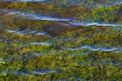 Water weeds in rippled water Royalty Free Stock Images
