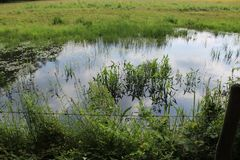 Water, Wetland, Marsh, Nature Reserve royalty free stock image