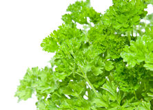 Water wetted Parsley Stock Image
