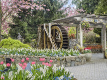 Water wheel in Butchart Gardens, Victoria British Columbia. In the spring stock image