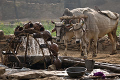 Water wheel powered by cattle Royalty Free Stock Image