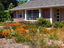 Water wise gardening in California. Brick house with water wise garden in front. Some homeowners prefer to save the planet by avoiding grass lawns and growing Stock Images