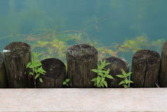 Water Wood Concrete. Water, wood, plant, concrete different material things Stock Photography