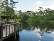 Water and wood walkway in a jungle Royalty Free Stock Image