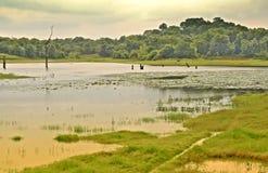 Water world. Ulhitiya lake (Man made) in Mahiyanganaya Sri Lanka. Known as a main source of water supply for the surrounding rise and vegetable farm lands Stock Photos