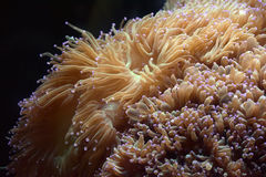 Water world algae Royalty Free Stock Photo