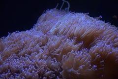Water world algae Stock Photo