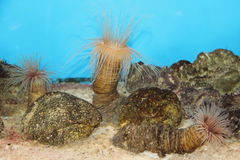 Water world in aquarium. The water in the aquarium world. Fish, corals, octopus in the aquarium Stock Photography