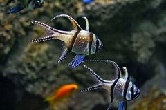 Water-world. Tropical fish. royalty free stock photos