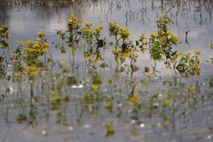Water, Yellow, Flora, Flower Royalty Free Stock Photo