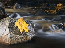 Water, Yellow, Rock, Leaf Stock Image