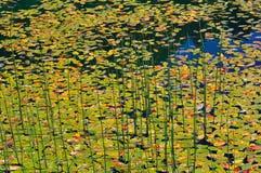 Äldst lake Fotografering för Bildbyråer